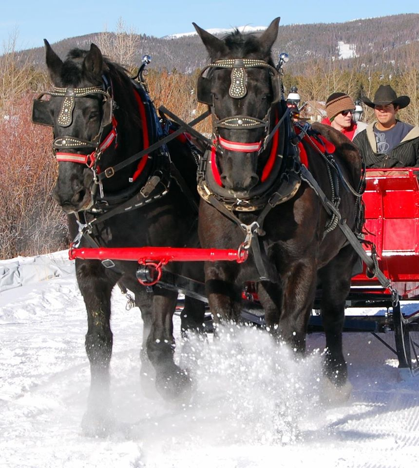 I. Sleigh _ Carriage